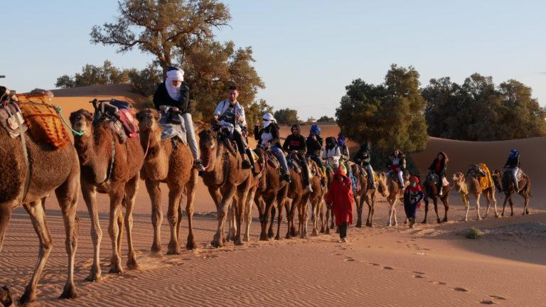 Randonnée à dos de chameau